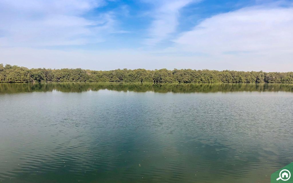 Mangrove National Park, Abu Dhabi
