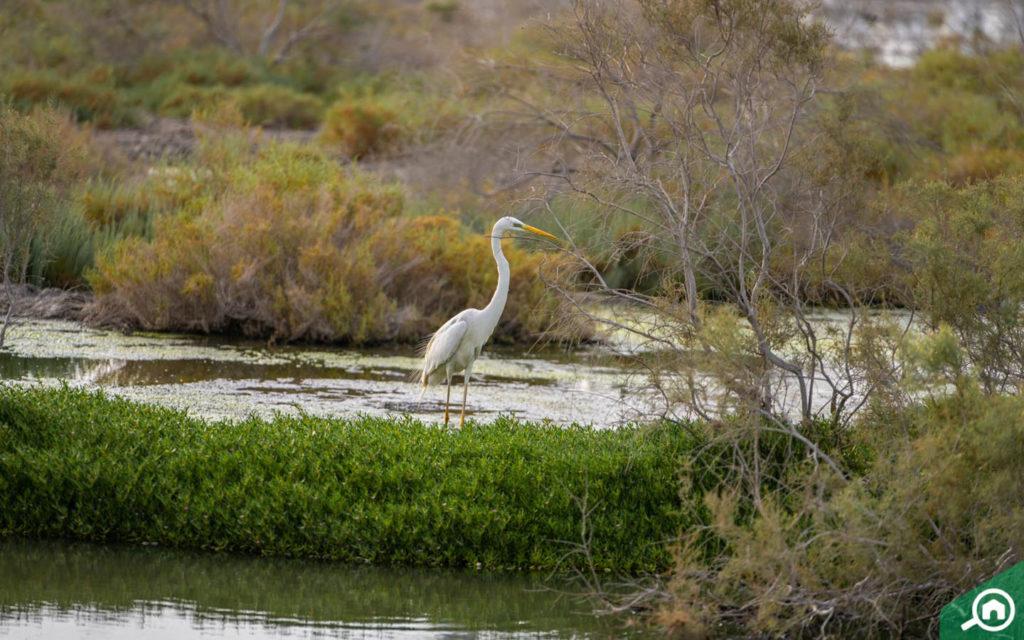 Ras Al Khor Wildlife Sanctuary birds