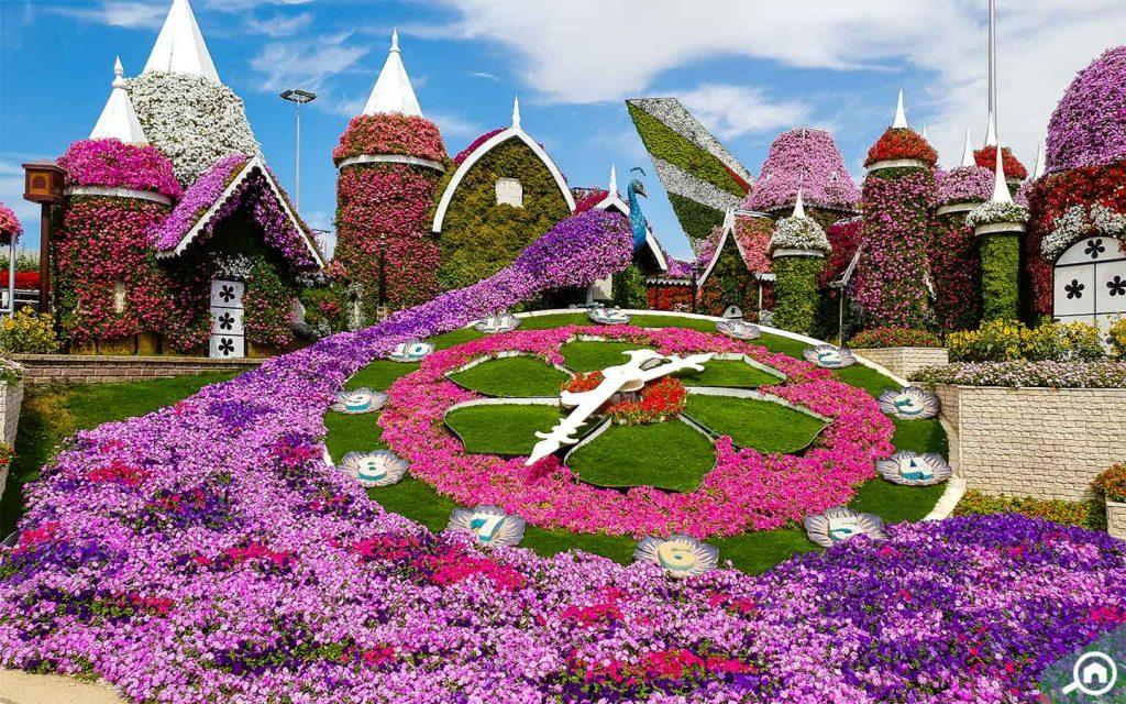 floral clock in Dubai Miracle Garden