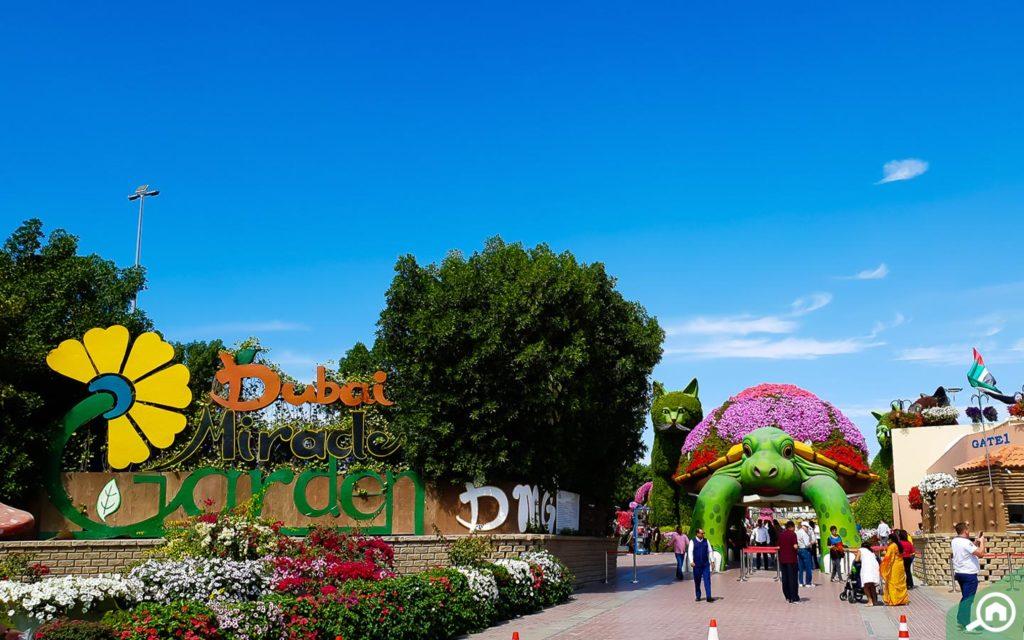Inside Dubai Miracle Garden